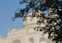 taj mahal: one of the wonders of the world: a view of the dome against the trees of the taj mahal
